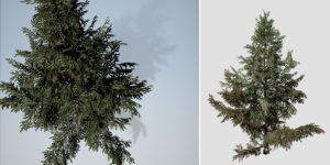 White Spruce: Hero Field