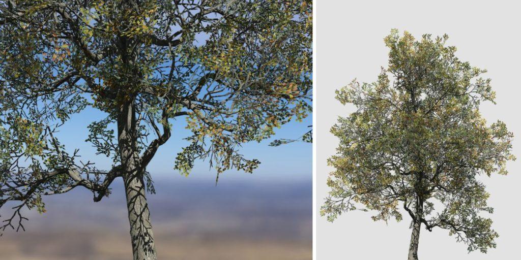 White Oak: Desktop Field (Medium)