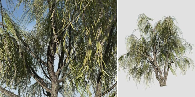 Peppermint Willow: Desktop Field
