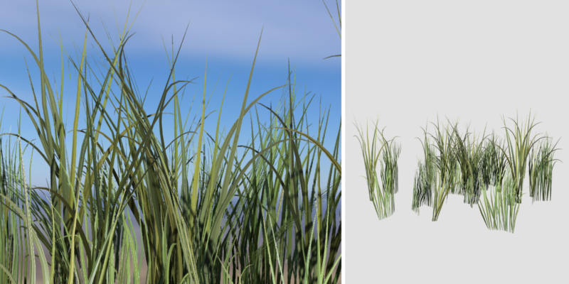 Rough Grass: Pack