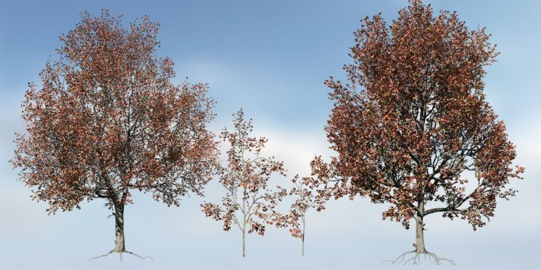 Red Maple Species Pack