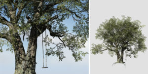 Holm Oak: Desktop Field with Swing