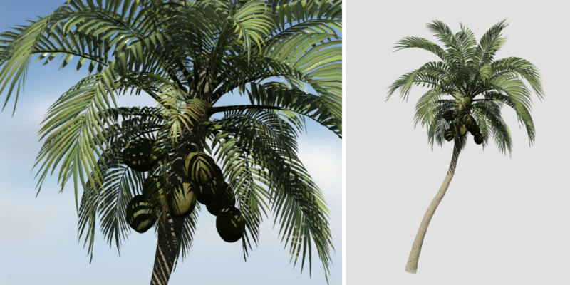 Coconut Palm: Desktop (Leaning)