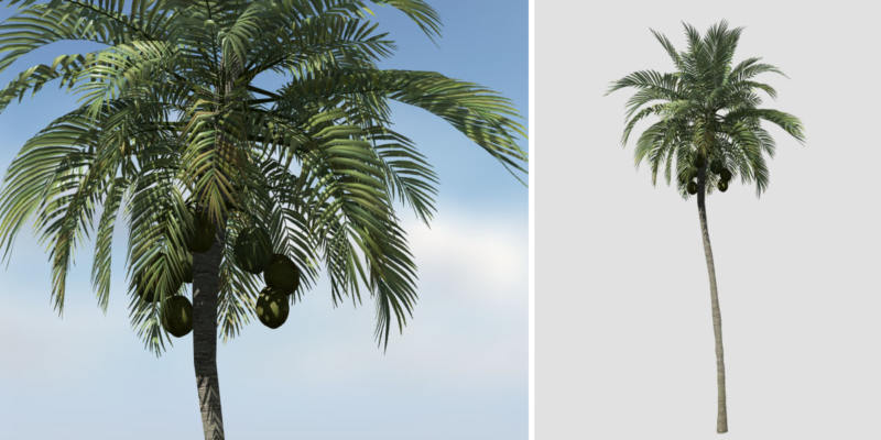 Coconut Palm: Desktop (Upright)