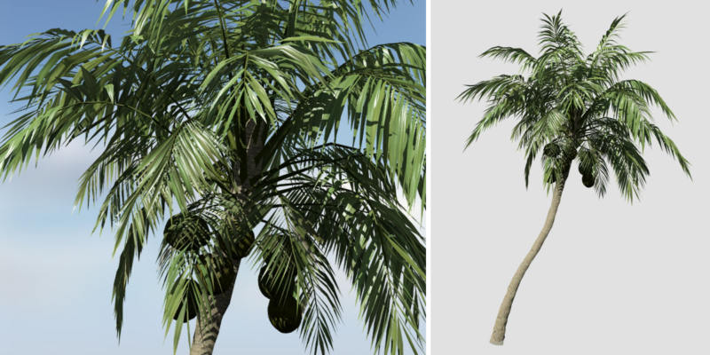 Coconut Palm: Hero (Leaning)