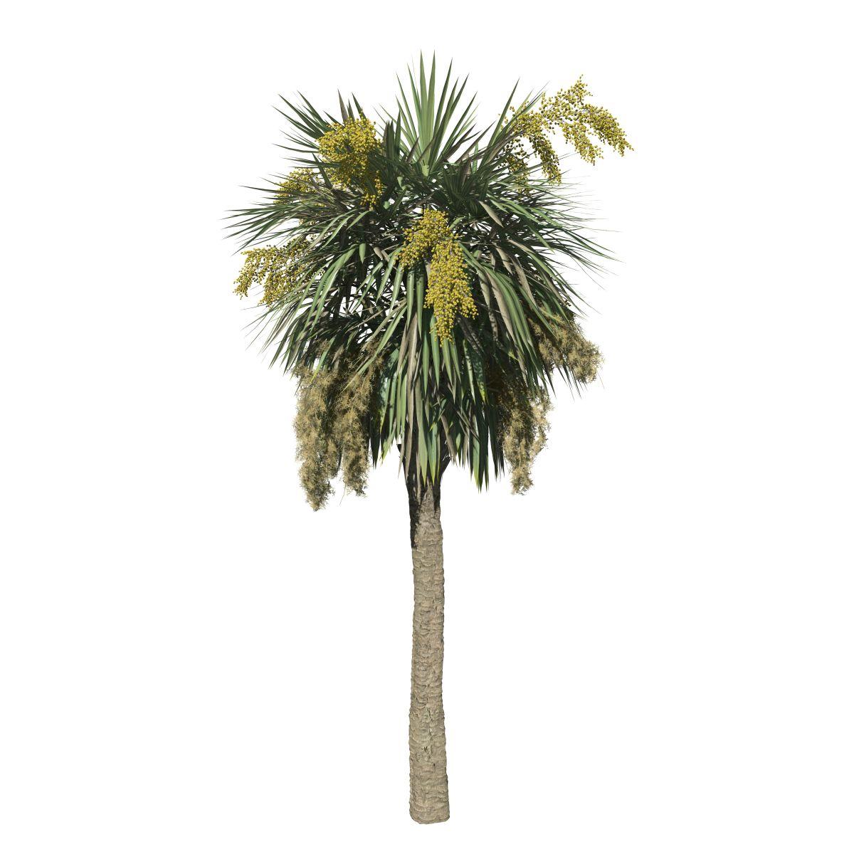 sabal palmetto field tall speedtree