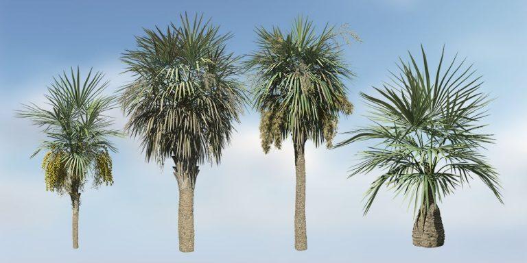 Sabal Palmetto Species Pack