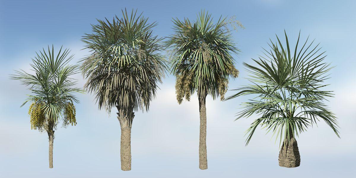 sabal palmetto species pack speedtree