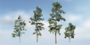 Eastern White Pine Species Pack