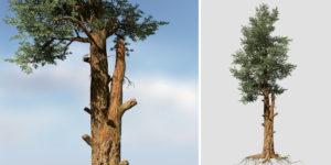 Redwood: Forest
