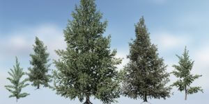 Norway Spruce Species Pack