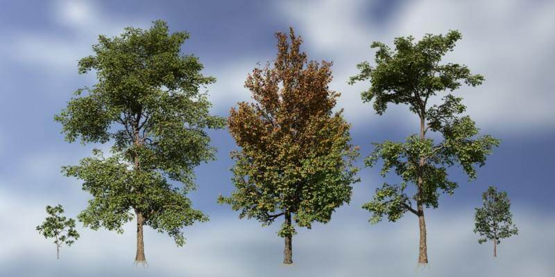 Sweetgum Species Pack