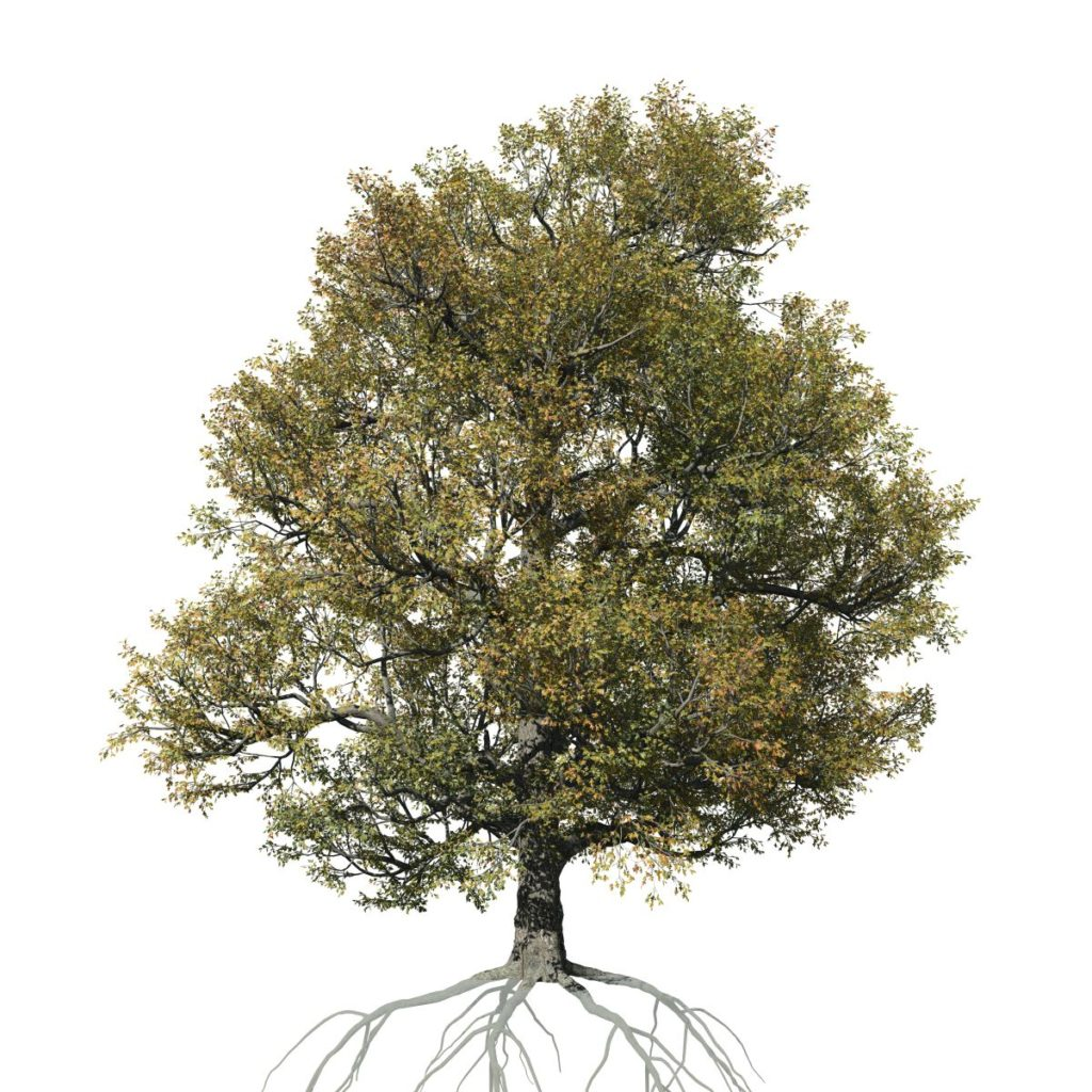 White Oak: Field