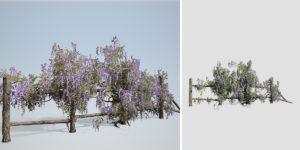 Wisteria Vine: Fence Climber