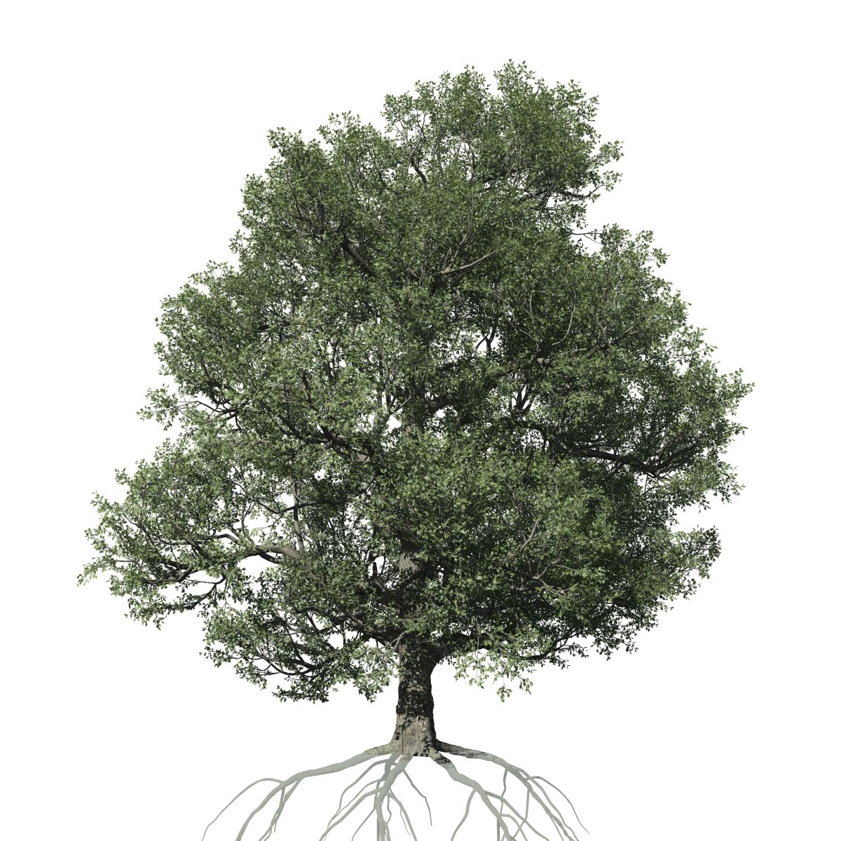 White Oak Species Pack Speedtree