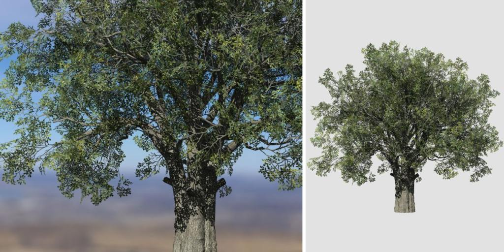 White Oak: Hero Field (Thick Trunk)